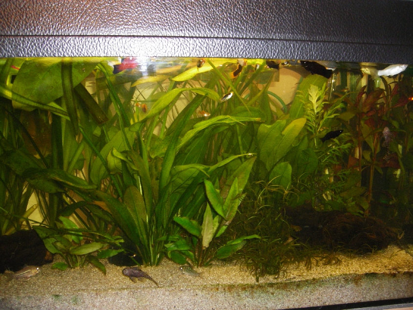 fische schwimmen oben aquaristik forum aquaristik. Black Bedroom Furniture Sets. Home Design Ideas