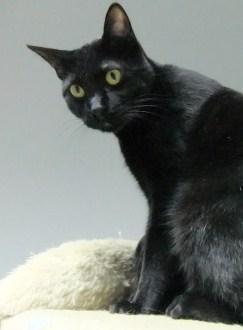 katzenhilfe katzenherzen samtpfoten suchen ein zuhause seite 5 katzen forum. Black Bedroom Furniture Sets. Home Design Ideas
