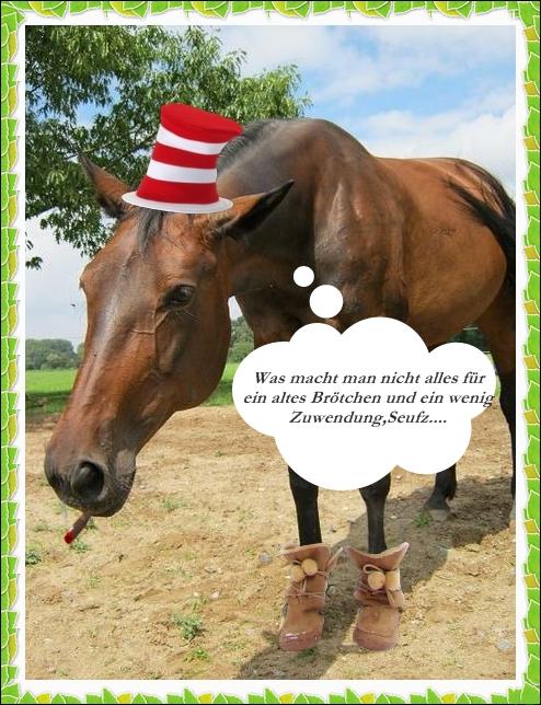 Pferd  Jasminspferd37vk