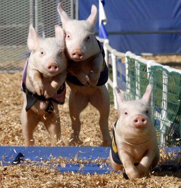 Śmieszne zdjęcia zwierząt #10 46