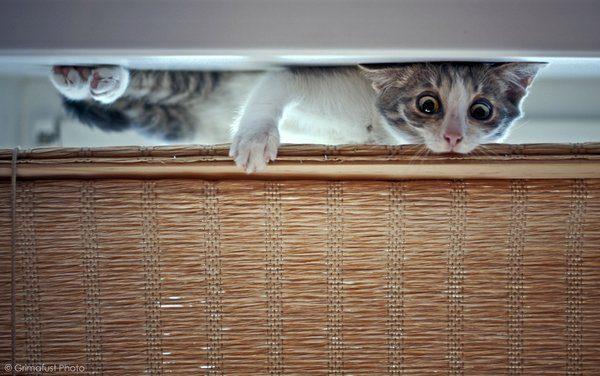 Przyczajone koty #3 2