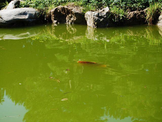 Fischjagd mit dem Teckel... K-dsc_0075qe1i