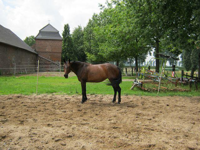 Pferd  K-img_0418vj89