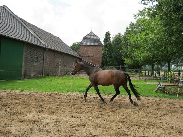 Pferd  K-img_0420mmtb