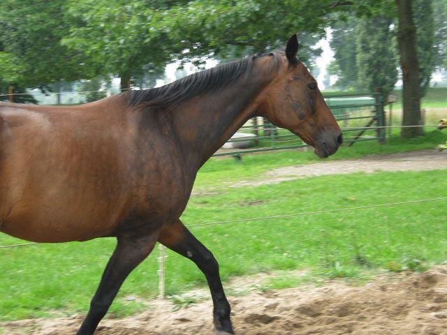 Pferd  K-img_0441hkpl