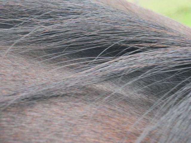 Pferd  K-img_0446zk3q