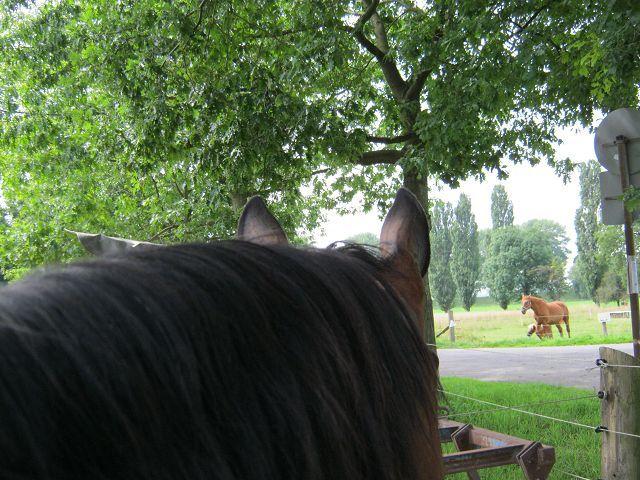 Pferd  K-img_0469bmop