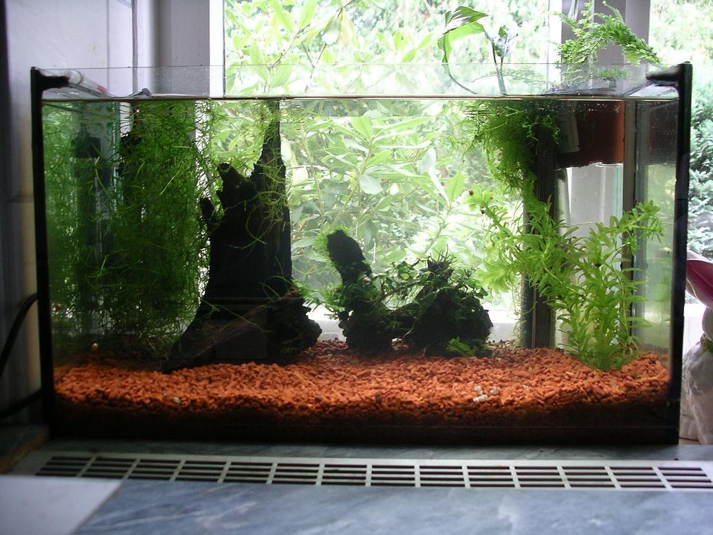 tongranulat im aquarium. Black Bedroom Furniture Sets. Home Design Ideas