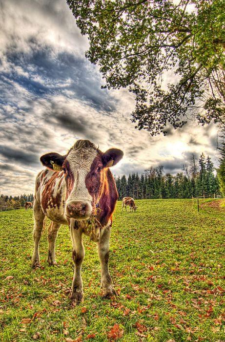Zdjęcia zwierząt w HDR 26