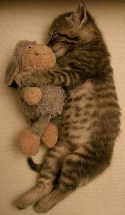 Śpiące zwierzaki #3 14