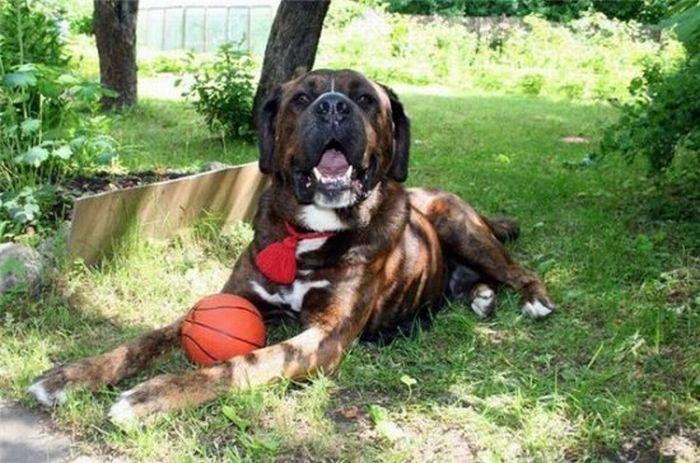 Psy, które dostały szansę na drugie życie 36