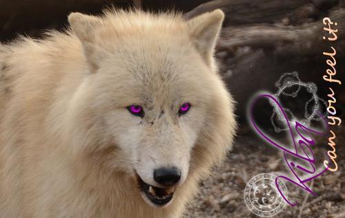 Wolfsheulen Kibacb8vyak