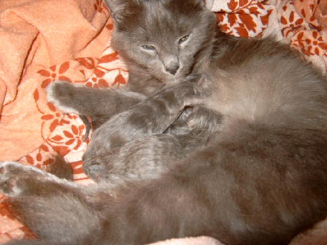 We've got kitten!!! Kitten003jfl