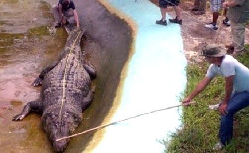 zanimljivosti iz svijeta nauke Krokodile8uj8