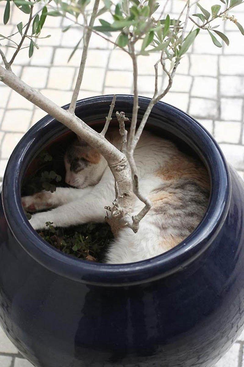 Gdzie śpią koty? 14