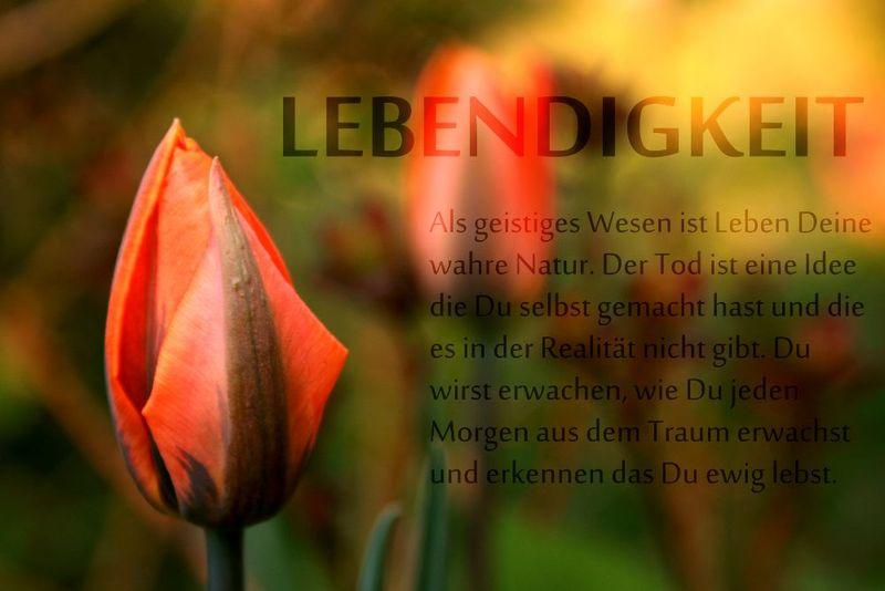 An den Beitrag angehängtes Bild: http://www.abload.de/img/lebendigkeit704y.jpg