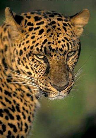 Netis Leopard_ds02816cvf4