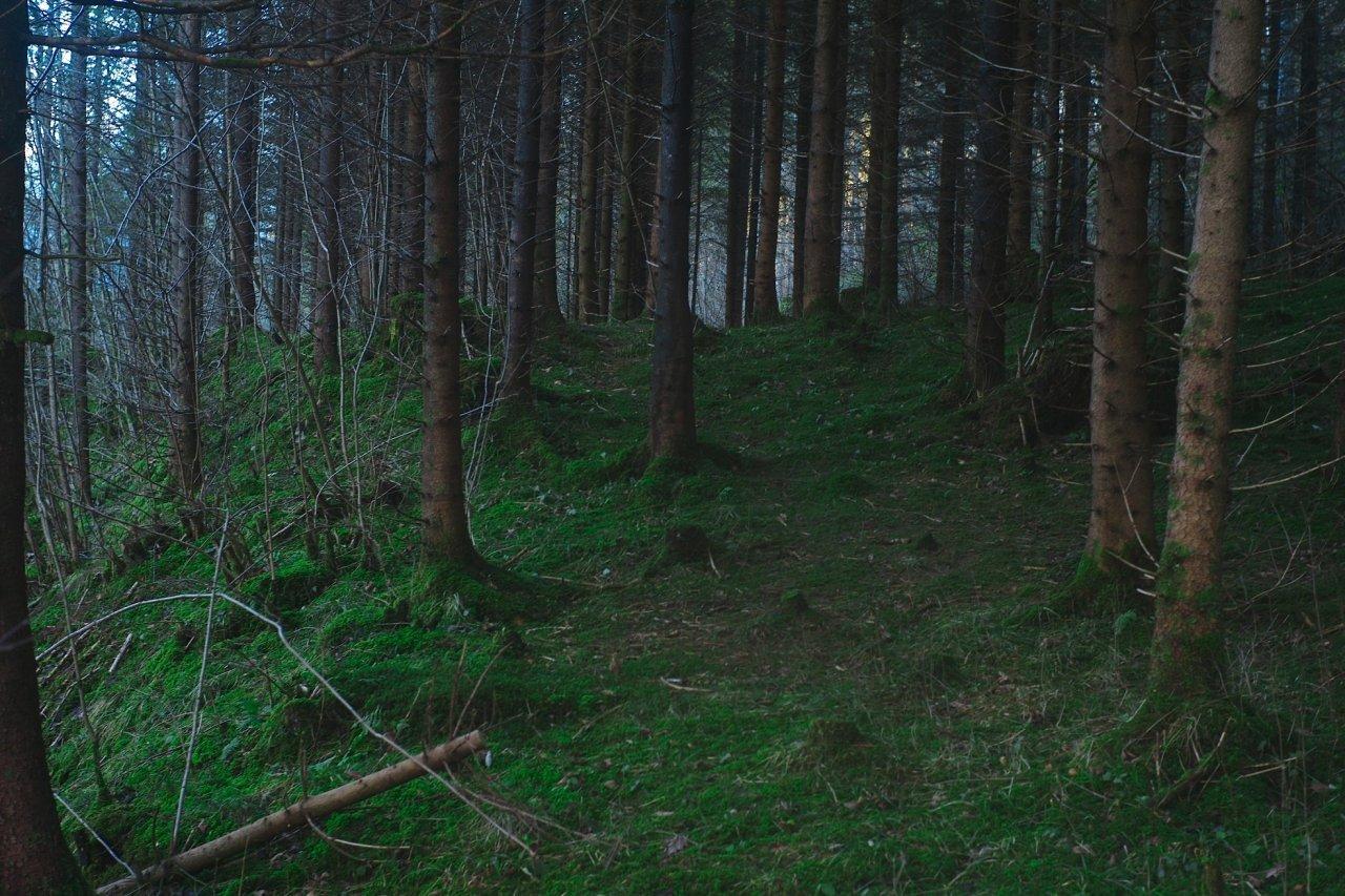 Tajemnicze lasy 5