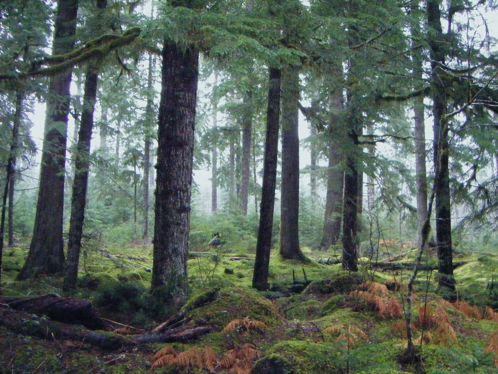Tajemnicze lasy 27
