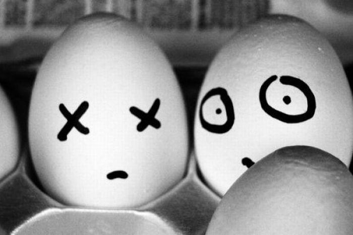 Sekretne życie jajek 8