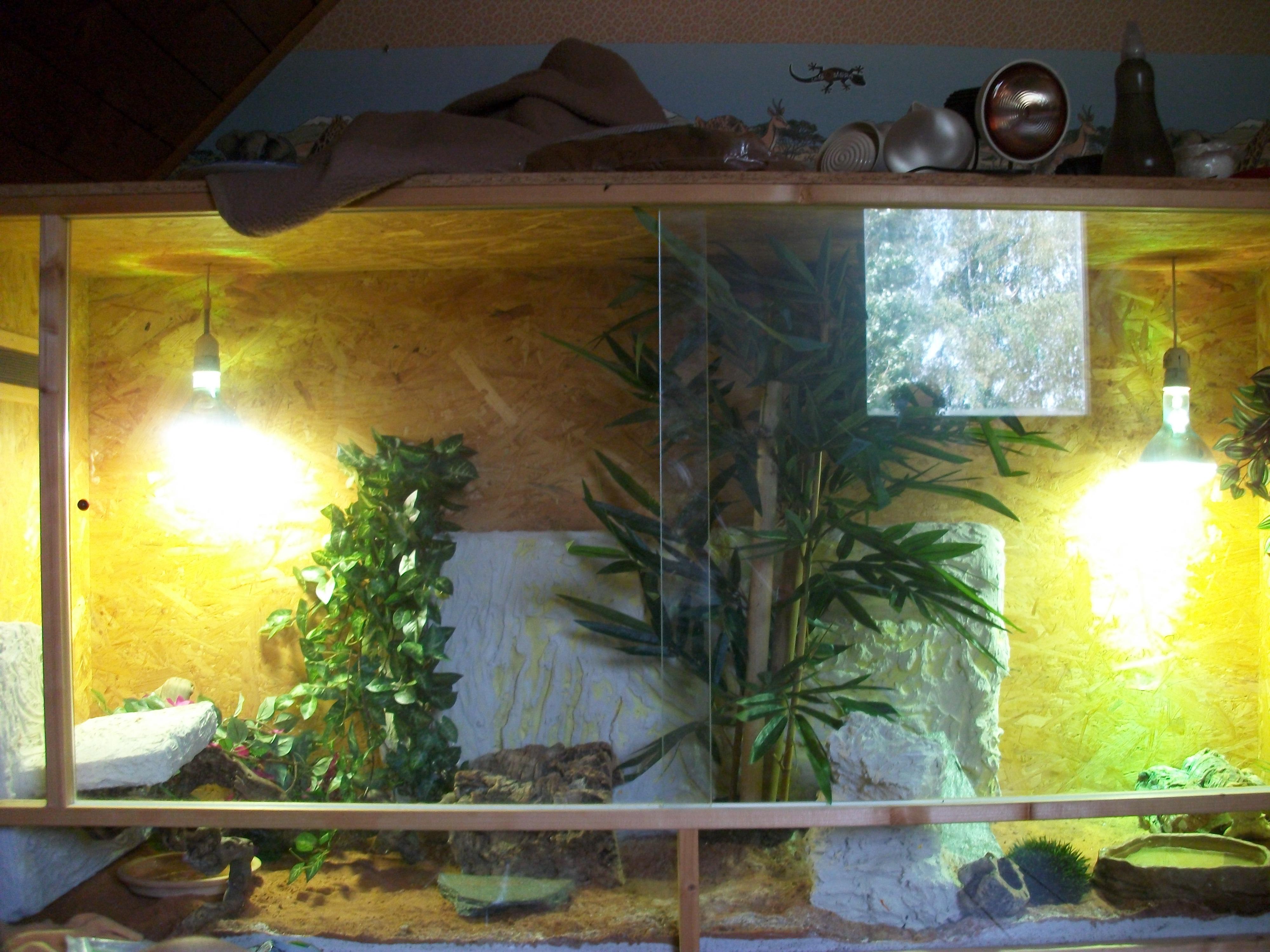 Terrarium ist 2 meter lang, 1 meter hoch und ca 80Freue mich