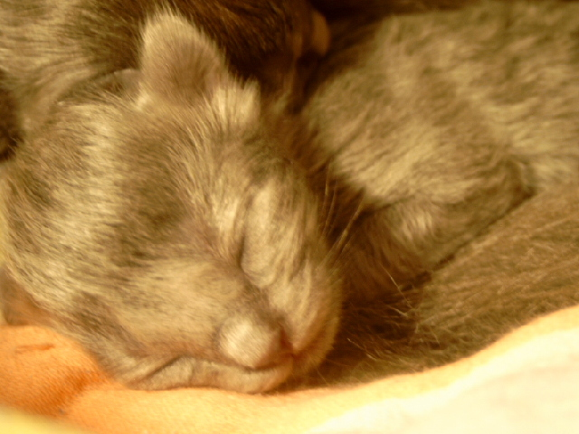 We've got kitten!!! Mittwoch013j1y