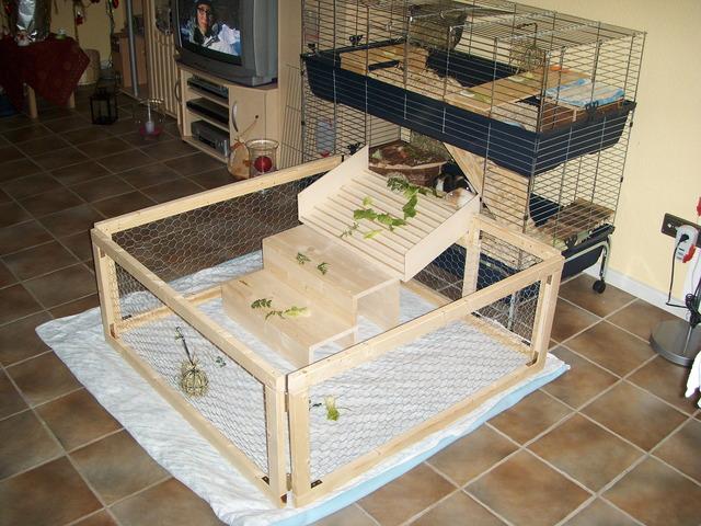 zugang zum freilauf meerschweinchen haltung. Black Bedroom Furniture Sets. Home Design Ideas