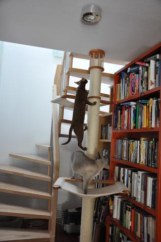 katzen forum kratzbaum ein oder zwei. Black Bedroom Furniture Sets. Home Design Ideas