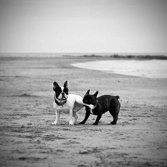 Zabawne zwierzaki #42 24
