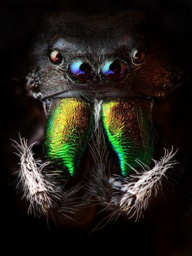 Makrofotografia: owady #3 9