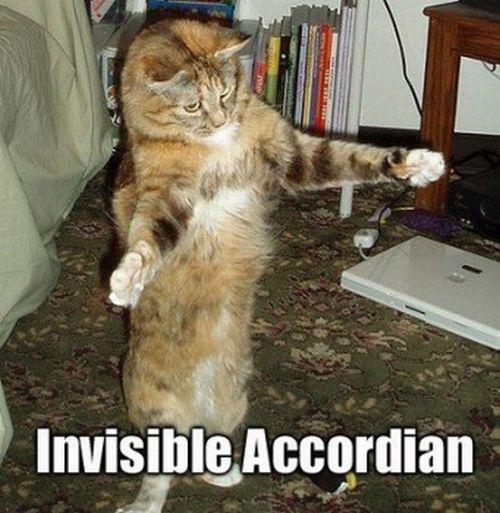 Koty i niewidzialne przedmioty 1