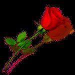 Orden der Rose