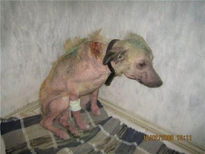 Psy, które dostały szansę na drugie życie 44