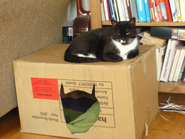 m bel kaufen nur noch f r mich do it yourself katzenforum mietzmietz das forum ber katzen. Black Bedroom Furniture Sets. Home Design Ideas