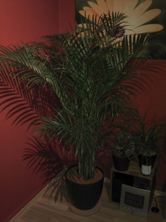 palme29suwb.jpg