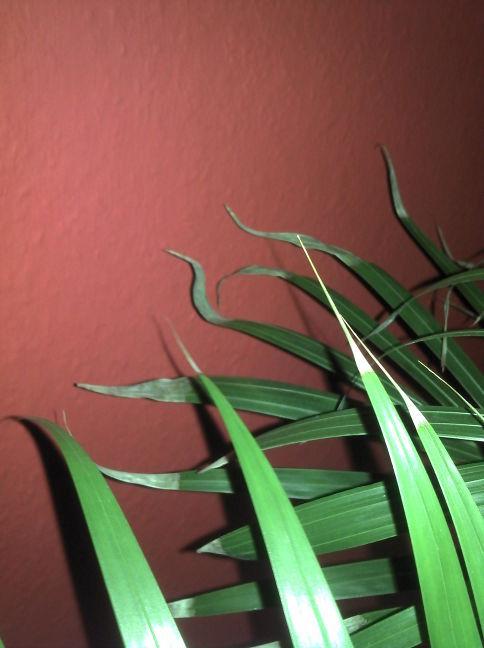palmewdubc.jpg