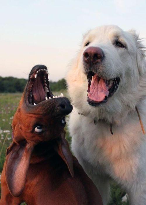 Zabawne zdjęcia psów 28