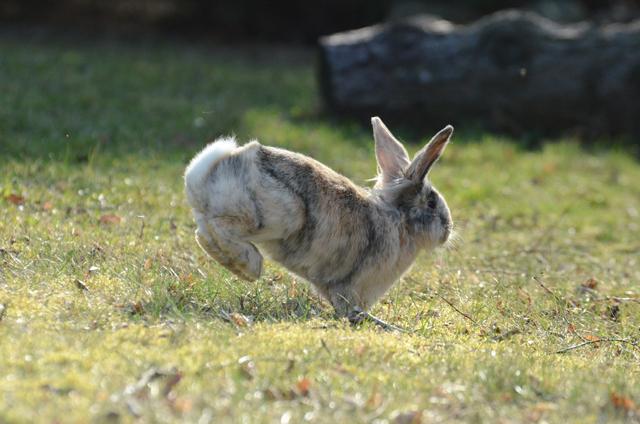 kaninchen hüpfen