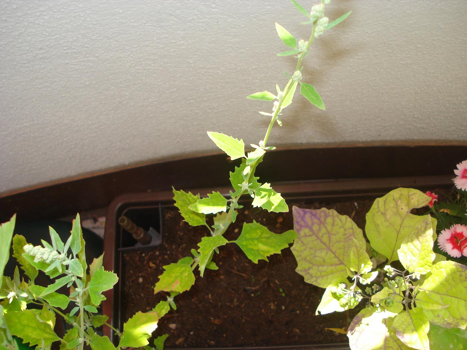 was ist das f r eine pflanze v2 garten pflanzen blumen. Black Bedroom Furniture Sets. Home Design Ideas