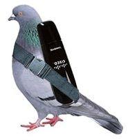 http://www.abload.de/img/pigeon_airmailuejpn.jpg