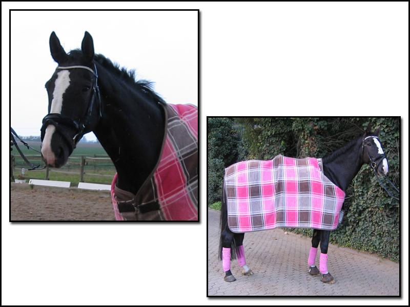 in welcher farbe ist euer pferd eingekleidet welche steht. Black Bedroom Furniture Sets. Home Design Ideas