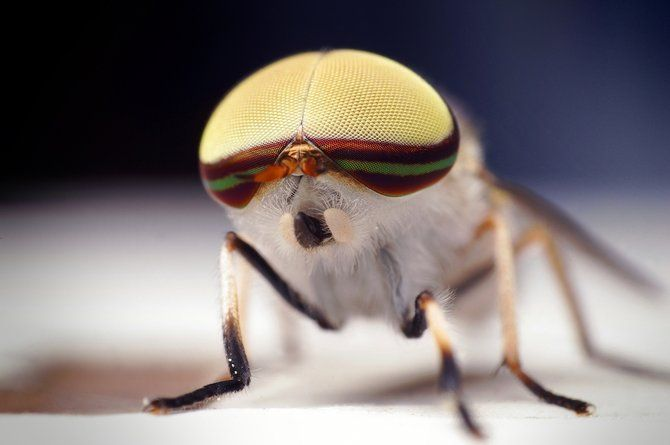 Makrofotografia - owady z bliska 2