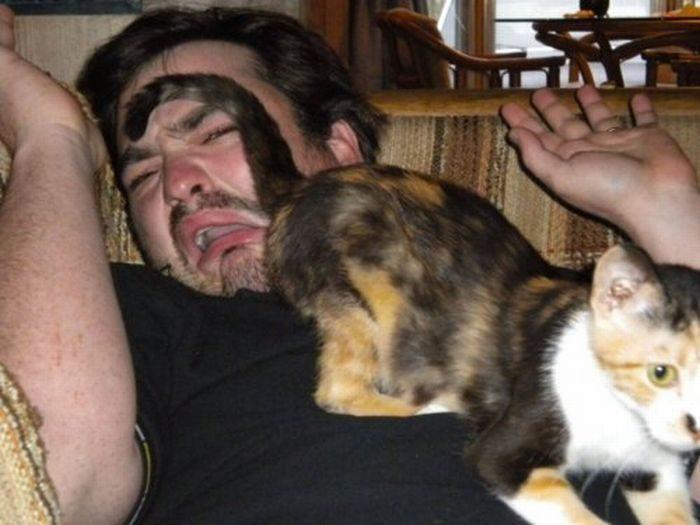 Nieznośne koty 4