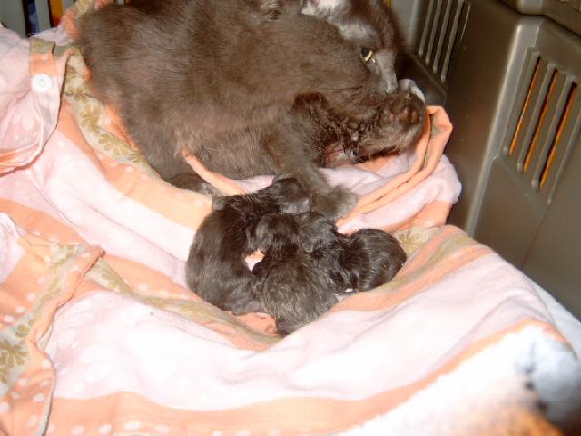 We've got kitten!!! Sallyfreitag004e0w