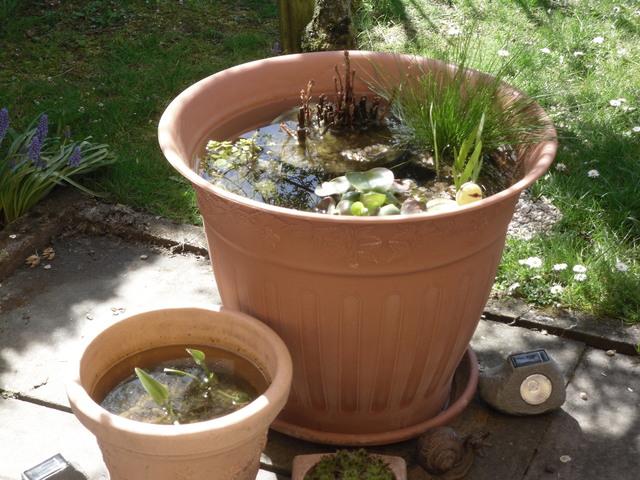 Miniteich im Kübel : Haus und Garten