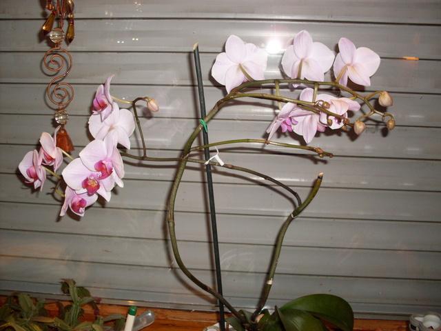 vanda orchidee bl ht nicht antworten 11 bis 20. Black Bedroom Furniture Sets. Home Design Ideas