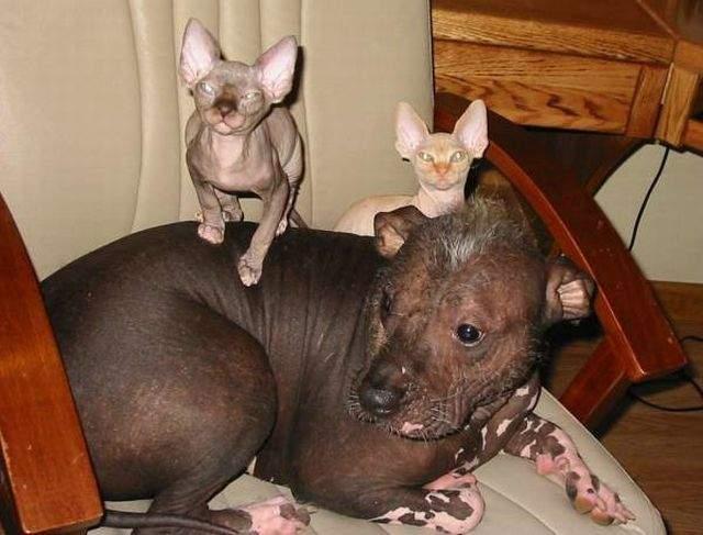 Kot i pies w jednym domu ? 46