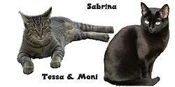 neues mittel gegen zecken und fl he bravecto katzen forum bergkatzen. Black Bedroom Furniture Sets. Home Design Ideas