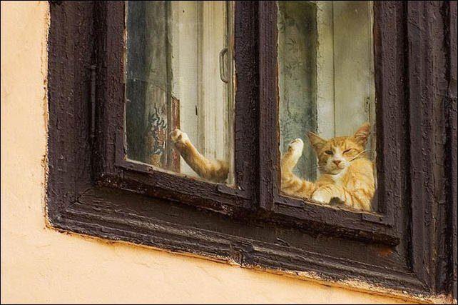 Wyluzowane koty 49