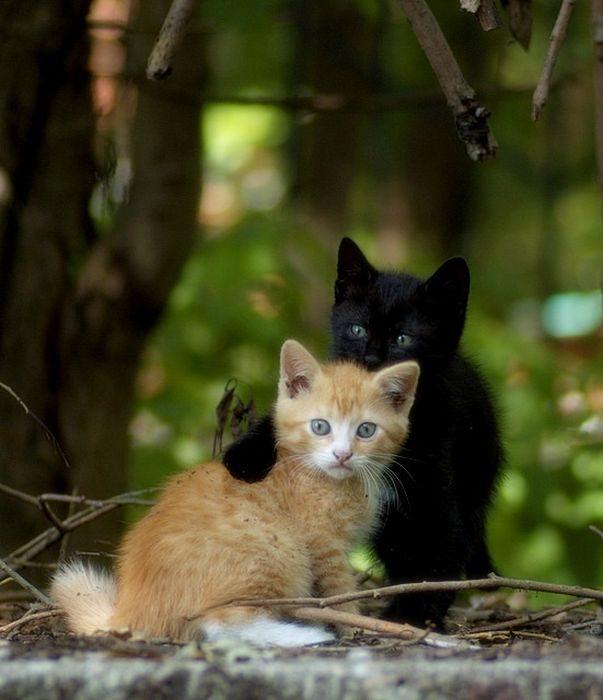 Słodkie kociaki 53